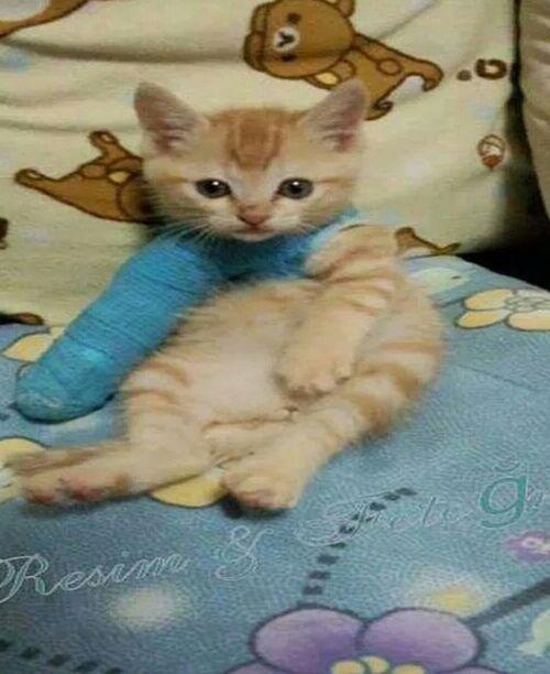 Hello Kitty <3 Cat♡