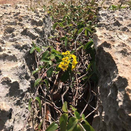 Sharp Rock Dry Forest Coast Yellow Flower Arid Plants Warm Hot It was 98*F when I took this picture. Hot enough to forget about photography and think about surviving. It was fun though. The Week On EyeEm