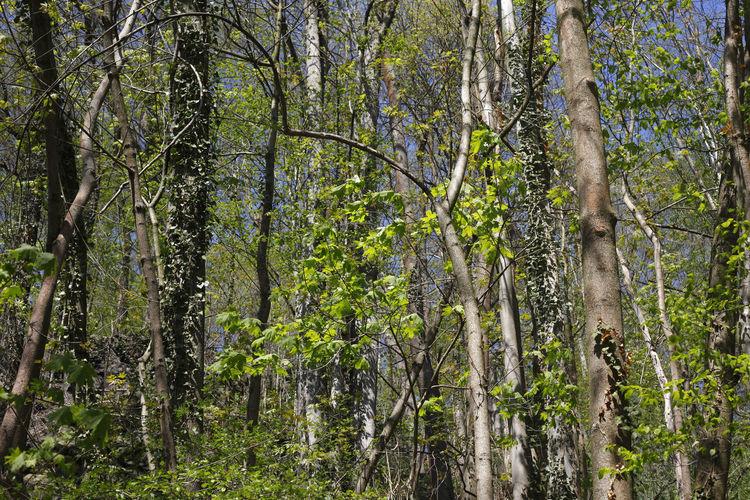 Wald im
