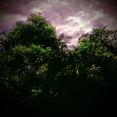 Cloud - Sky Tree Sky Silhouette Nature Plant Outdoors No People Beauty In Nature Storm Cloud Day