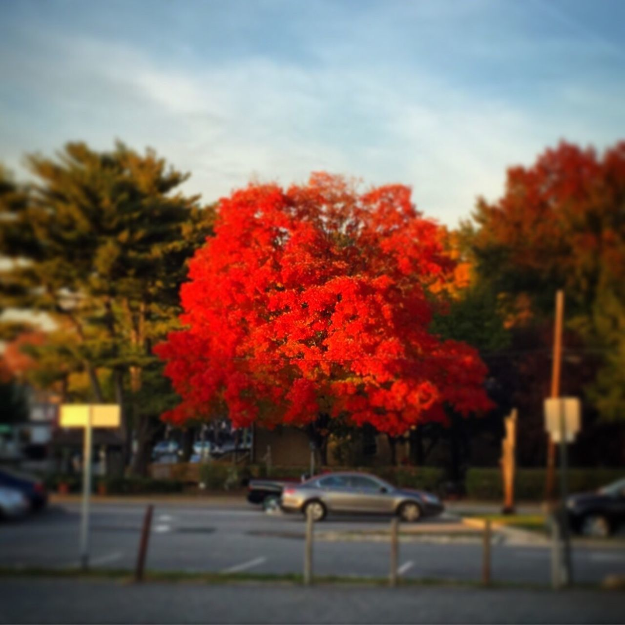 tree, car, change, autumn, transportation, growth, day, outdoors, land vehicle, nature, no people, red, road, leaf, sky, beauty in nature, close-up