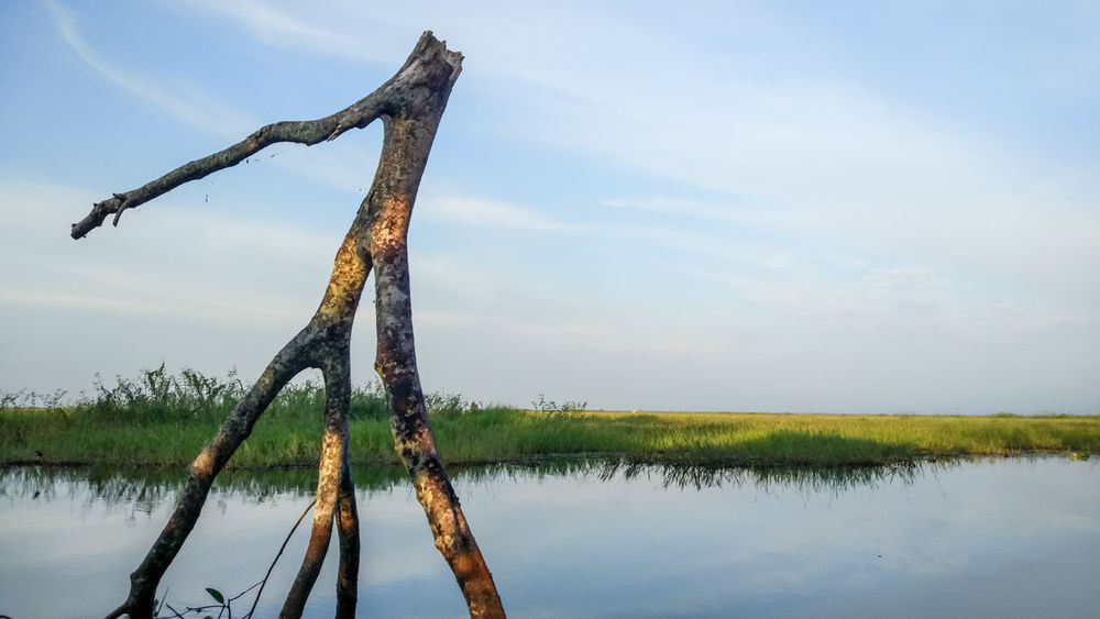 EyeEm Indonesia EyeEm Best Shots Lake Reflection Water Sky Cloud - Sky Outdoors No People Day Rural Scene Nature Tree Watermill Beauty In Nature City Tranquility Tranquil Scene Scenics Green Color Landscape Grass Dead Tree