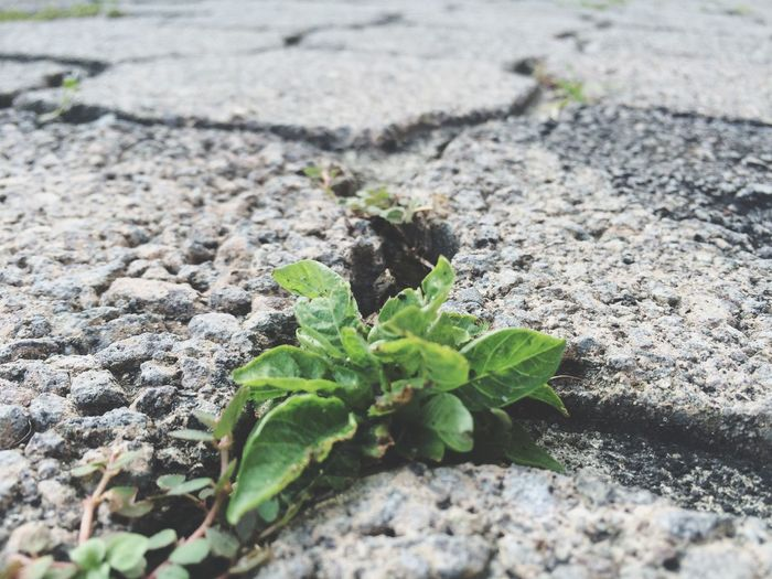 Street Plants On The Way
