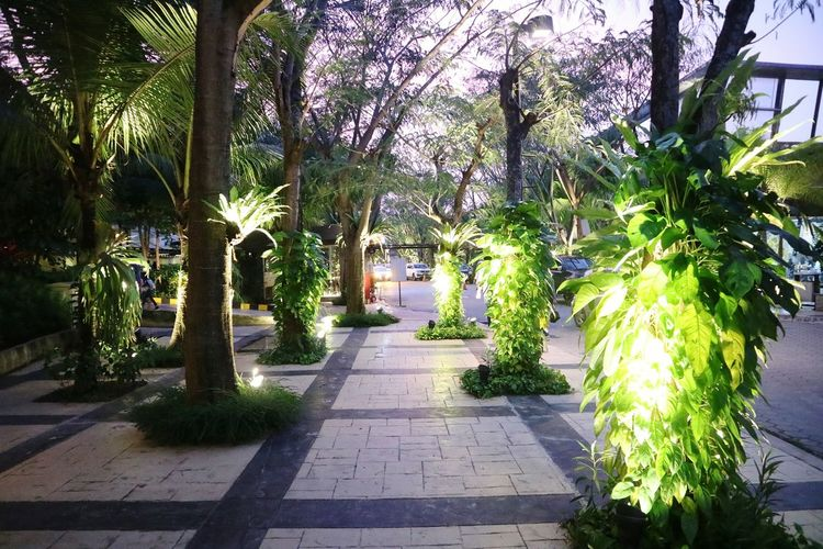 Walkway amidst trees and plants