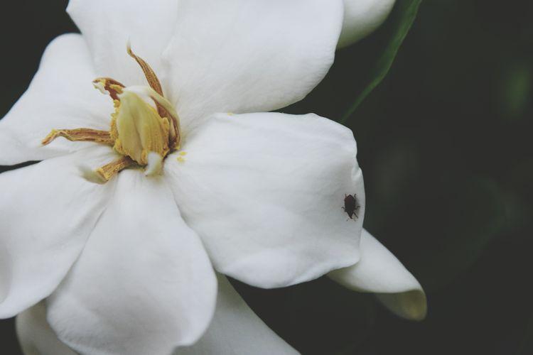 Flower Animal