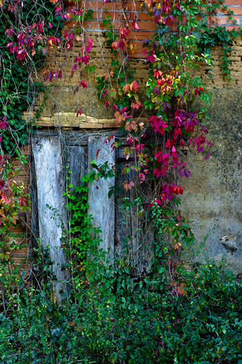 Flowering plants in old building