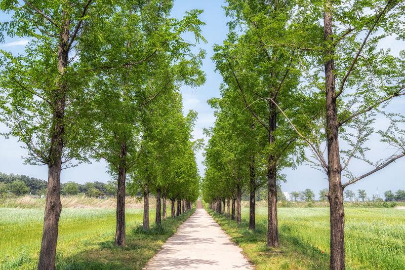 Footpath amidst trees on landscape