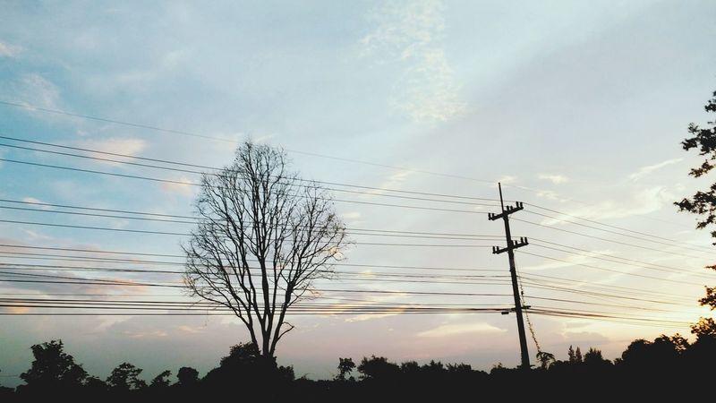 Sunset Tree Nature