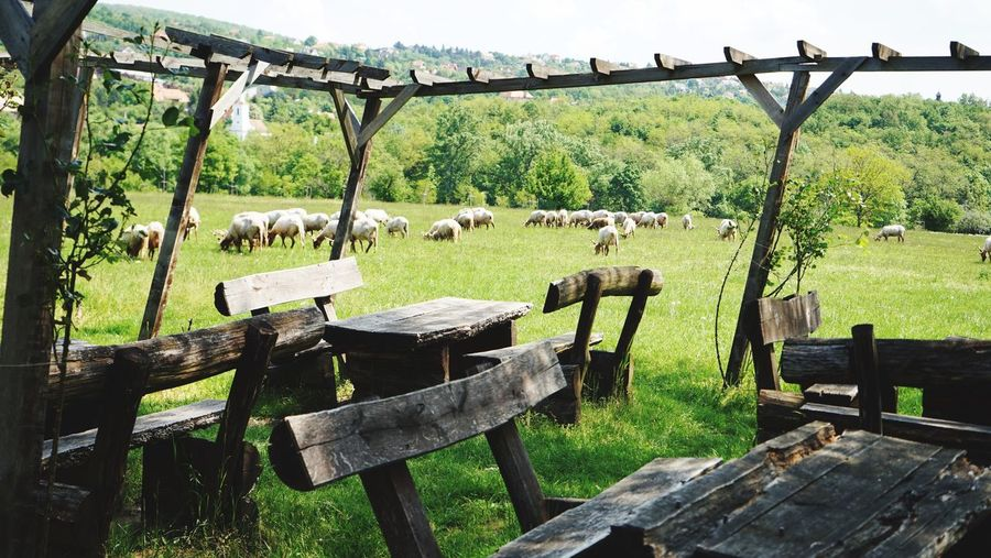 Sheeps Budapest Hungary Countryside Sheeps Sheep Farm Plant Seat Green Color Nature Day No People Land Grass Barrier Beauty In Nature Landscape Outdoors
