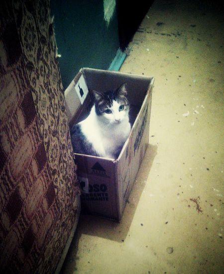 Cat ♡ & Box