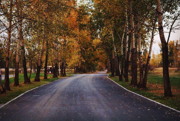 осень мои фото учусьфотать фотолюб Vscocam Autumn 10likes MyPhotography Taking Photos Landscape