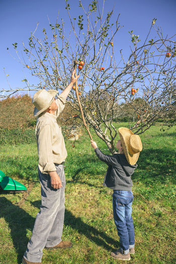 Grandfather With Grandson Standing By Apple Tree On Field During Sunny Day