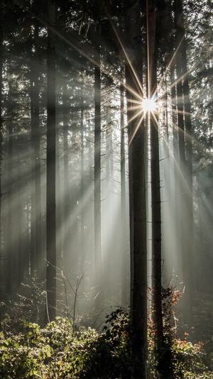 Nature Sunbeam Tree Forest Sunlight Reflection Fog Beauty In Nature Tranquility Sunrays Tree Trunk Scenics Outdoors Streaming No People Winter Water Light Effect Freshness