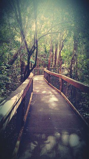 Hanging Out Relaxing Enjoying Life Port Macquarie Beautiful Nature Rainforest Walks