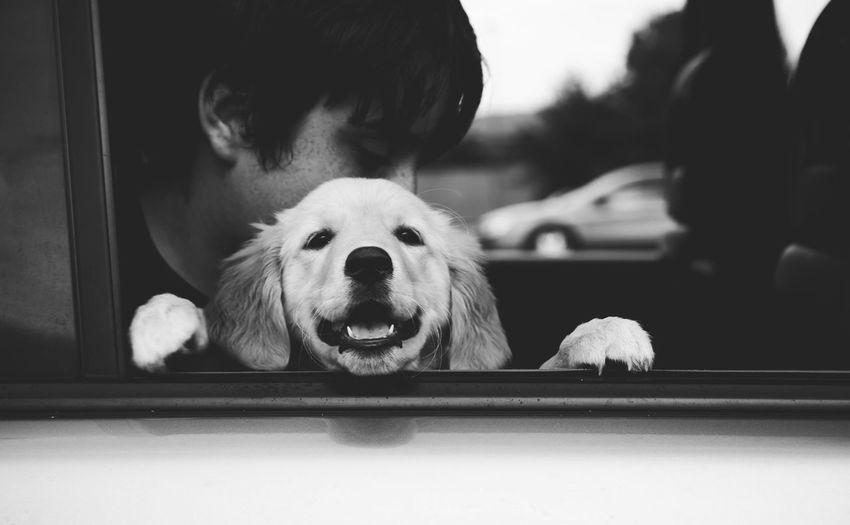 Portrait Of Golden Retriever Sitting With Boy In Car