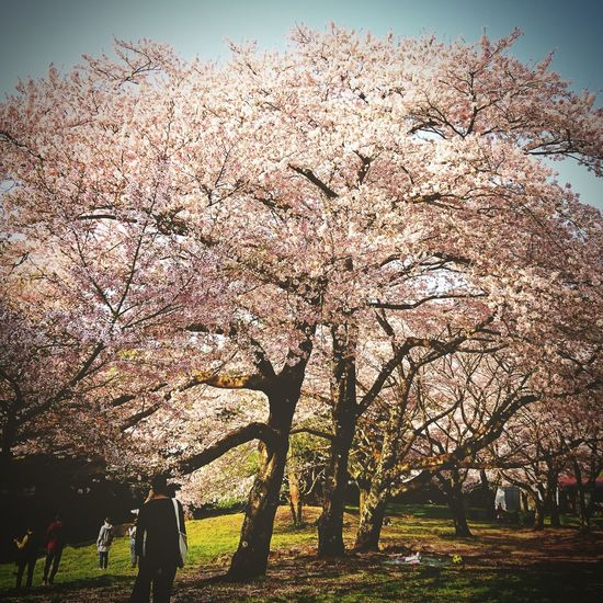 Grass Day Outdoors Sky Nature Tree Beauty In Nature People Adult Adults Only Only Men SAKURA,Japan,