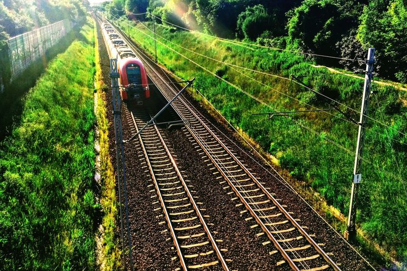 train in the green Tree Rice Paddy Agriculture Field Railroad Track Grass Green Color Train Track Train Parallel Railway Track Rail Transportation Track Railway Straight Passenger Train