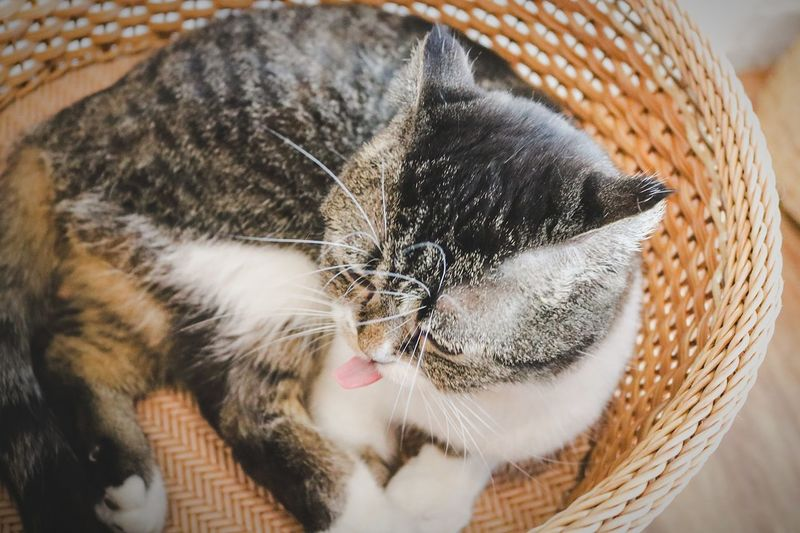 A cat in the basket.🐱 Pets Basket Cat Cute Animal Close-up Close-up First Eyeem Photo