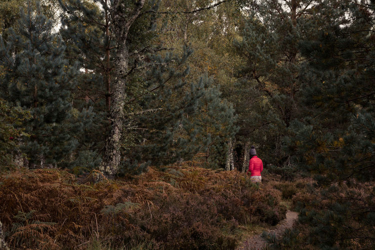 Rear view of person walking in forest