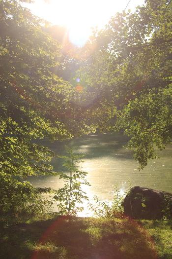 Kiryat Tivon Park Braunschweig Nature Nature_collection EyeEm Nature Lover water Trees Water_collection Naturelovers