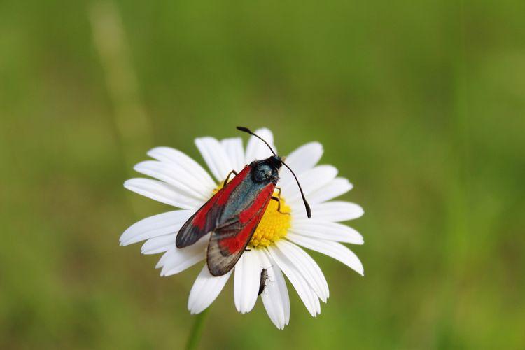 Insect Nature Beauty In Nature Flower Blumen Blume Blüte Insekten Auf Blüten Insekt