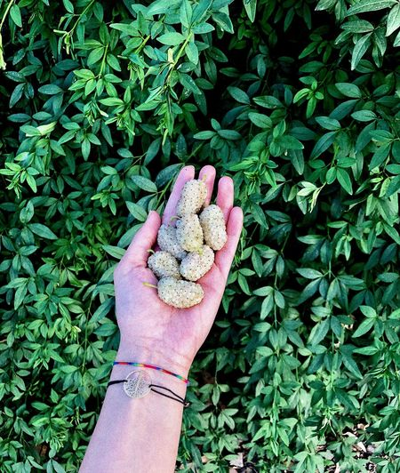 Cropped hand of person holding unripe fruits by plants