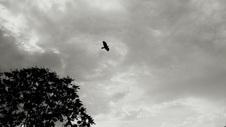 Thanks Wulf! Just One Tree and Just One Bird Black & White Streetphoto_bw Street Photography Clouds Silhouette_collection EyeEm Best Shots - Black + White EyeEm Best Shots
