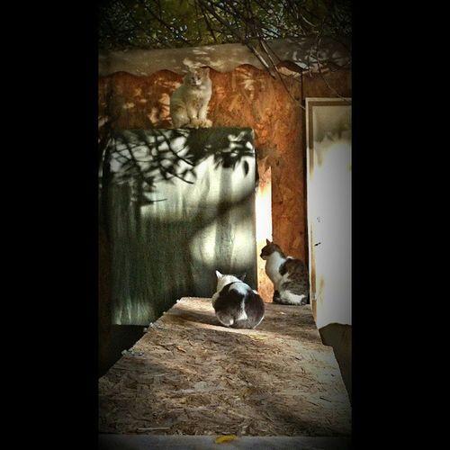 Theguardianofthefleamarket хранителибарахолки стражибарахолки Коты котэ кот кошка животные книжная барахолка дверь дерево осень autumn fall outside outdoor tree leaves cats stray animals