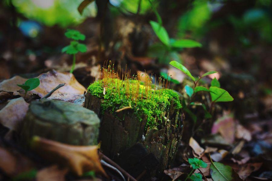 炮台湾湿地里可爱的植物