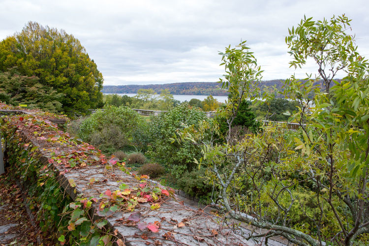 Overlooking the Palisades Agriculture Beauty In Nature Day Fall Beauty Fall Colors Horizon Over Land Landscape Leaf Leaves Nature No People Outdoors Overlook Plant Scenics Travel Destinations Trees