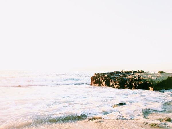 Seals rest on a rock on a beach in La Jolla, California. Shot and edited on iPhone. Backgrounds Beach Bright Coastline IPhoneography Landscape Minimal Negative Space Ocean Rock - Object Scenics Sea Seals Shore Simple Summer Sunset Tranquility Water Waves