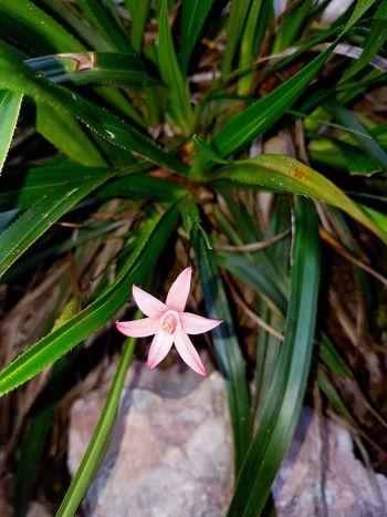 Orquídea❤ Plant Nature