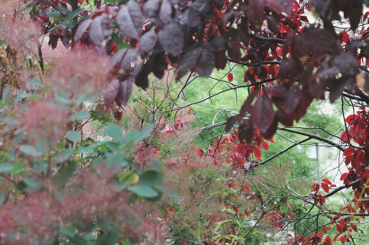 🌿 Freshment Nature Tree Red Branch Close-up Plant