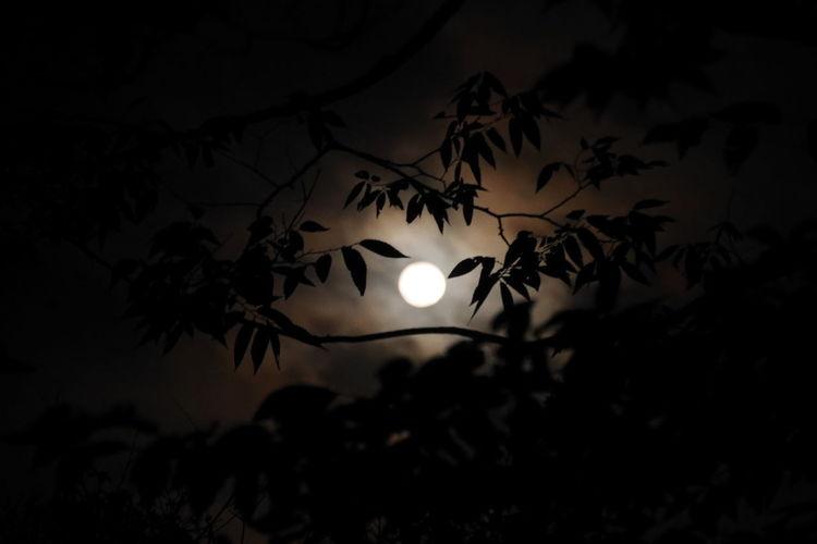 Micro Moon
