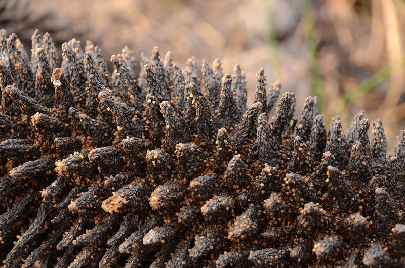 Brown Close-up Nature Plant Selective Focus Spiky Plant