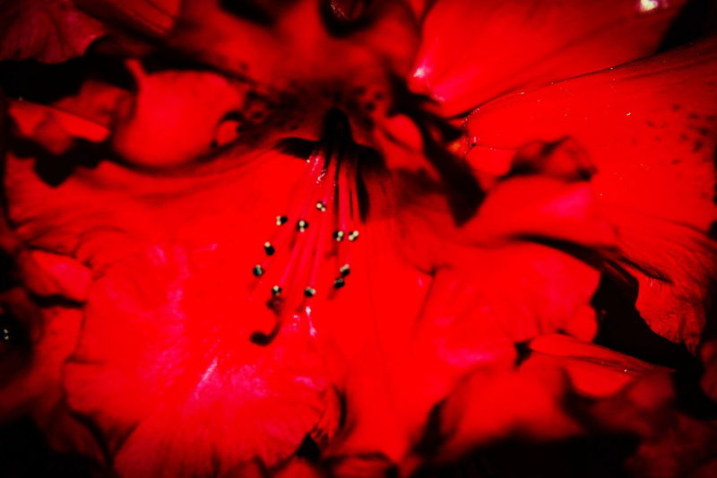 Water Red Drop