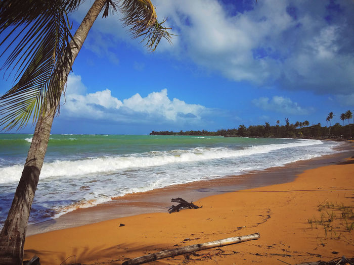 Beach Beauty In Nature Cloud - Sky Day Horizon Over Water Nature No People Outdoors Palm Tree Panorama Sand Scenics Sea Sky Tree Water