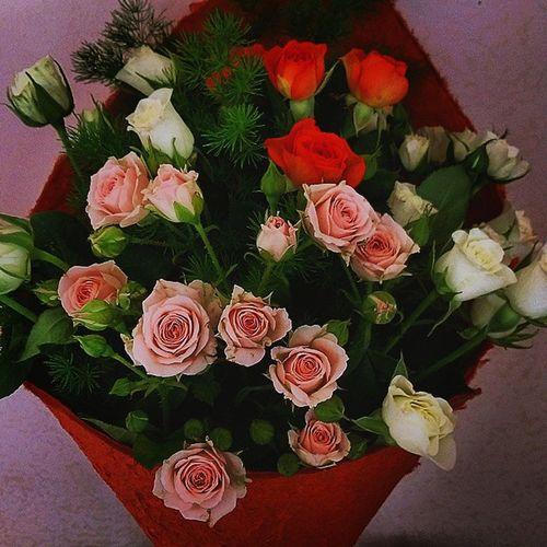 Rosé Littlerose Tiamo Seilamiavita iloveu CCM 150515 Le roselline più belle del mondo che rappresentano il mio amore per te, piccole e semplici come la tua pura semplicità, hai il cuore puro pieno di amore ed io come te..ti amo ❤🌷