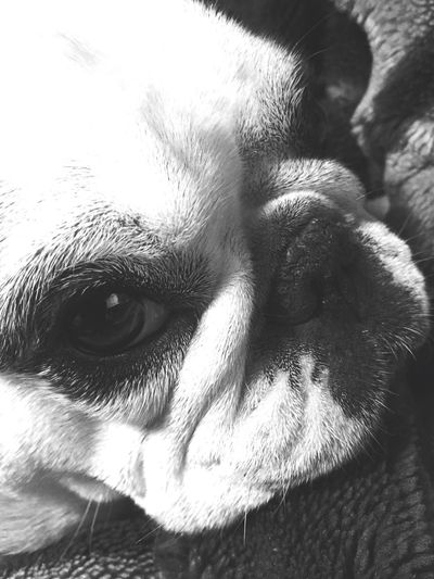 Blackandwhite Goodnight Mydog Taking Photos Photography