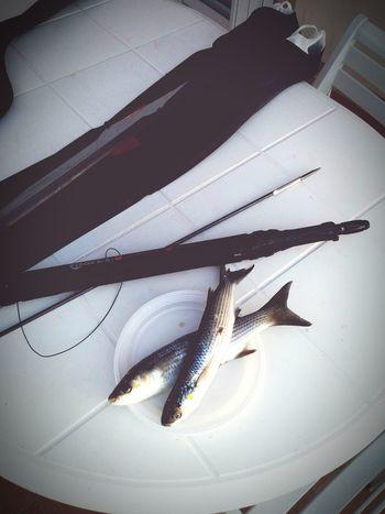 Spearfishing Apnea Pescainapnea Freediving Spear Fishing Fishing Immersion Spear Mares Cyrano