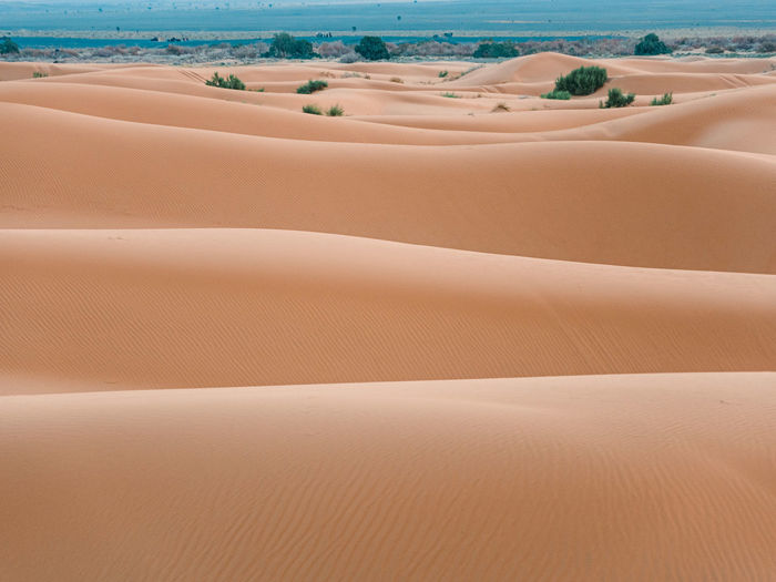 Scenic view of sand dunes at beach