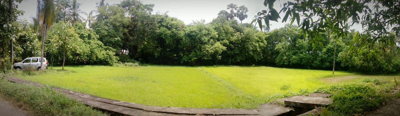 EyeEmNewHere Green Leaves Beauty In Nature Freshness Summer Check This Out Taking Photos PhonePhotography Nature Hello World Traveling No People Landscape Miles Away Grass Panoramic Car SUV Forest Home Town Kerala Nokia_camera Outdoors EyeEm Gallery