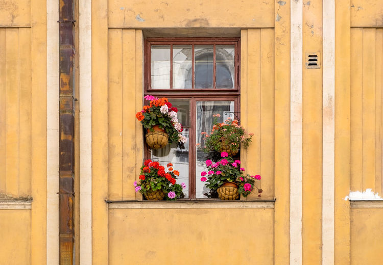 Potted plant against window of building