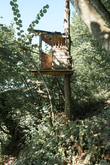 Architecture Beauty In Nature Day Green Color Growth Hanging Low Angle View Nature No People Outdoors Plant The Architect - 2017 EyeEm Awards Tree Tree House Wood - Material