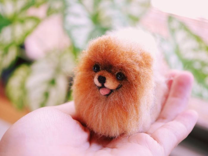 Pomeranian Dog Dogs Dogslife Dog❤ Dog Love Felting Needle Needlefelting Handmade Hand Handcraft Handcrafted Pretty Sweet Puppy Doll Dolls