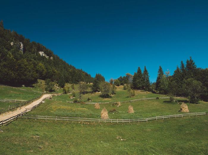 Carpathians