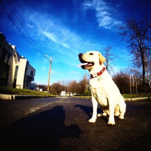 Утренняя прогулка в солнечный день :)