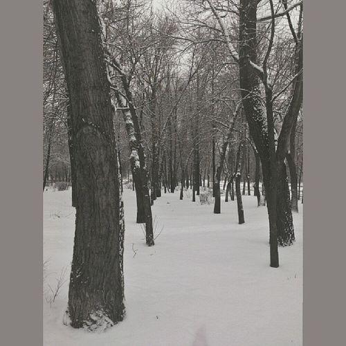 Winter December Park Trees instasize