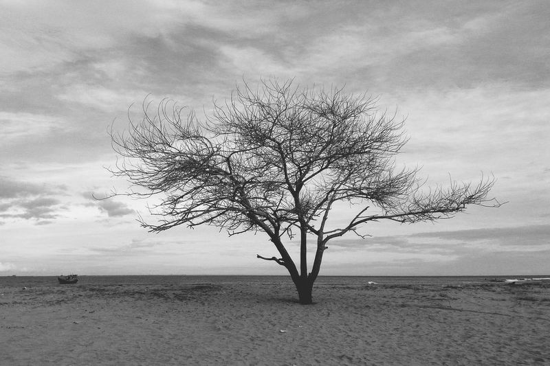 Black And White Friday Tree Sea Beach Cloud - Sky Nature Tranquility Outdoors Scenics Blackandwhite Lonely Alone StandStrong