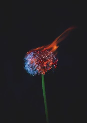 Not my photo, but I love it Nature Flower Flames Check This Out